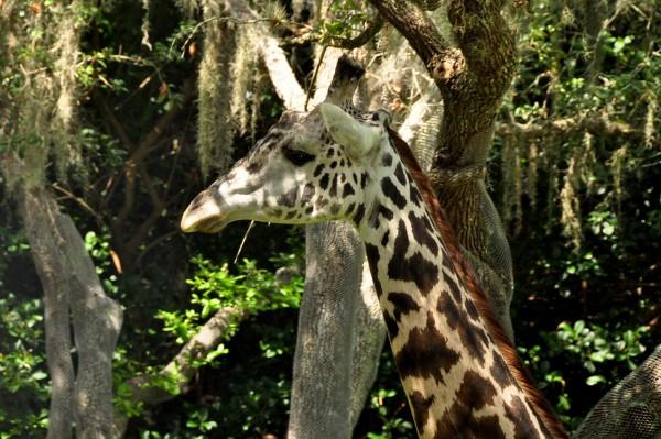 Wild Africa Trek 096