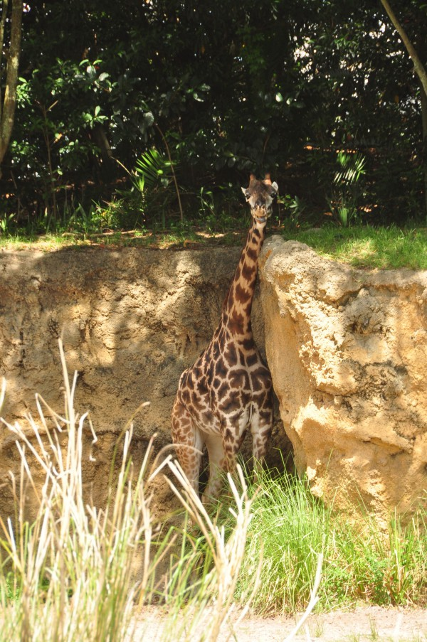 Wild Africa Trek 117