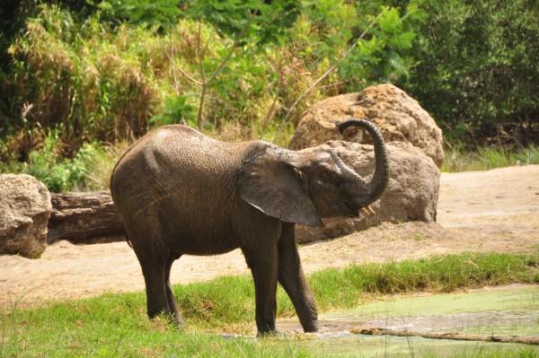 Wild Africa Trek 133